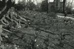 Woods-Gerry Grounds