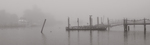 Foggy Cormorant Convention by Donna DeForbes and Fleet Library