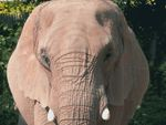 Elephant Day at Roger Williams Park by Stephen McCaughey and Fleet Library