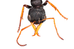 ant by Edna W. Lawrence Nature Lab
