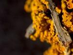 orange lichen 02 by Nature Lab