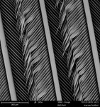 Catalina macaw feather by Edna Lawrence Nature Lab