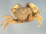 small crab by and Edna W. Lawrence