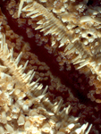sea star by Rachel Atlas and Edna W. Lawrence