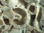 worm rock by Rachel Atlas and Edna W. Lawrence