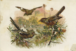 Untitled (Birds) by John Henry Bufford