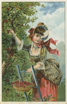 Untitled (Lady Picking Cherries) by John Henry Bufford