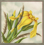 Untitled (yellow flower)