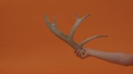 Minimal Drawing: Antler
